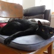 4階の黒猫