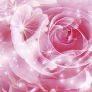 rose63☆