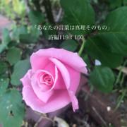 kyoko8759
