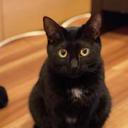 黒猫レシピ