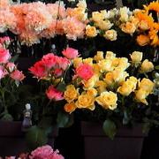 花いちもん