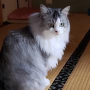 SUSUKすーさん